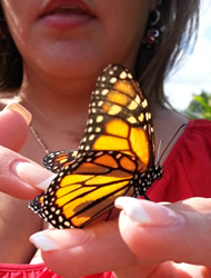 Monarch butterfly release at memorial service.