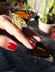 Woman enjoying Monarch butterflies at memorial service.