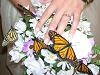 Monarch Butterfly Wedding